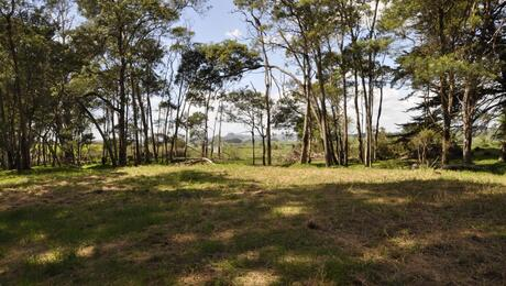 Oturei Settlement Road, Dargaville