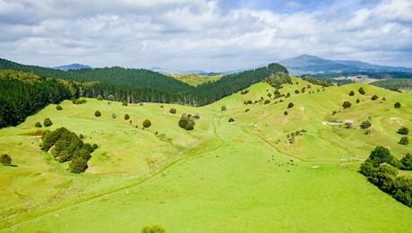 1191 Tangowahine Valley Road, Tangowahine