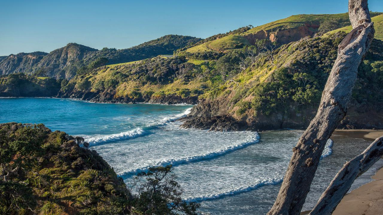 Farm / Ranch / Plantation for Sale at Elliot Bay, Absolutely Spectacular Coastal Farm New Zealand