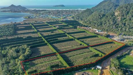 32 Gooseberry Grove, Pauanui