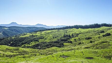 Kaiser Road, Te Puia Springs