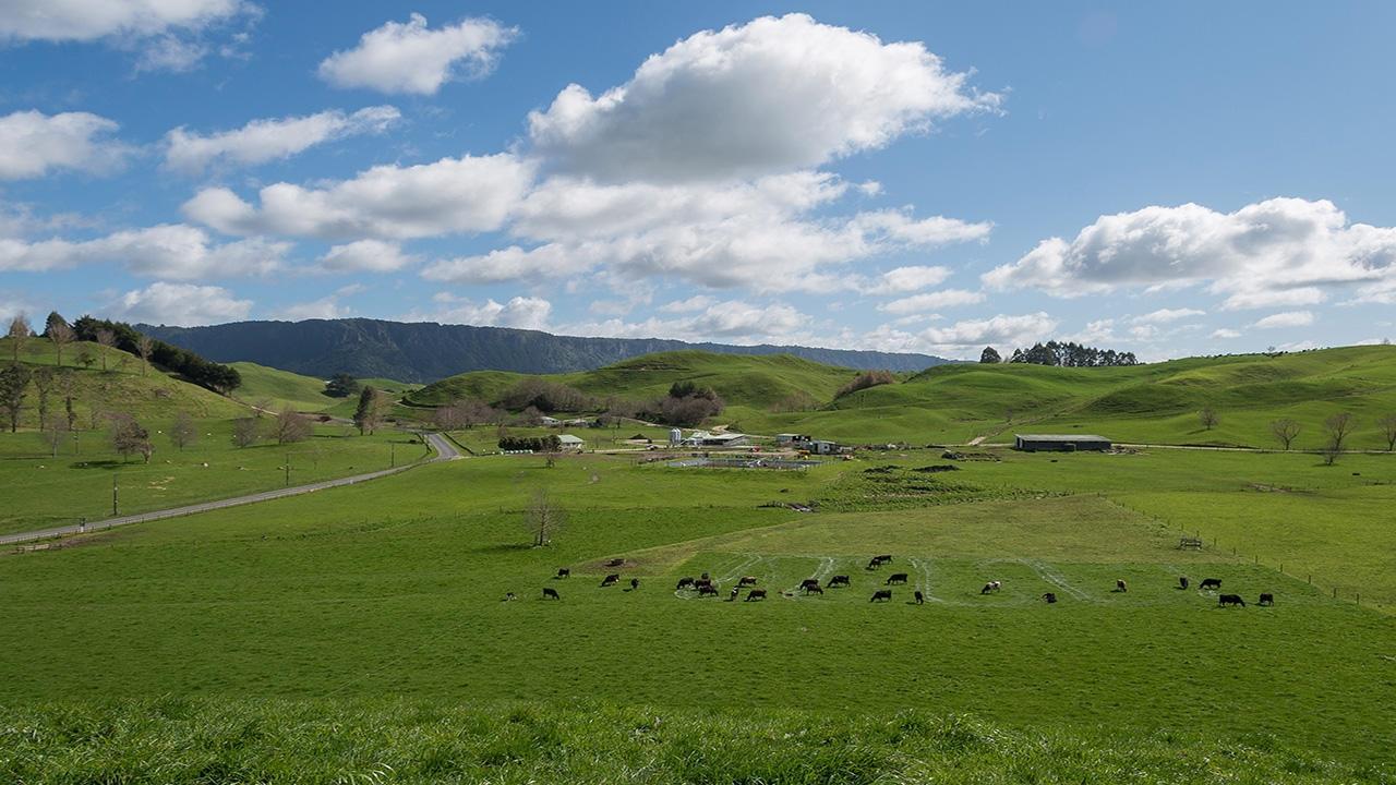 Whirinaki Valley Road, Ngakuru, Rotorua