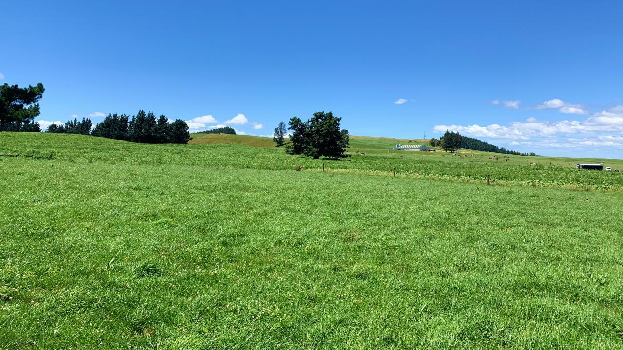 Ben Alpin, 3986 Puketitiri Road, Patoka