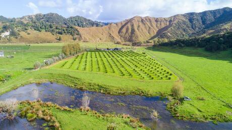 2196 Waitotara Valley Road, Waitotara