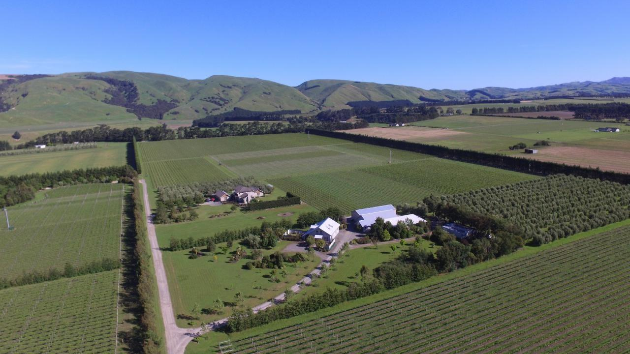 Julicher Vineyard,Te Muna Road, Martinborough