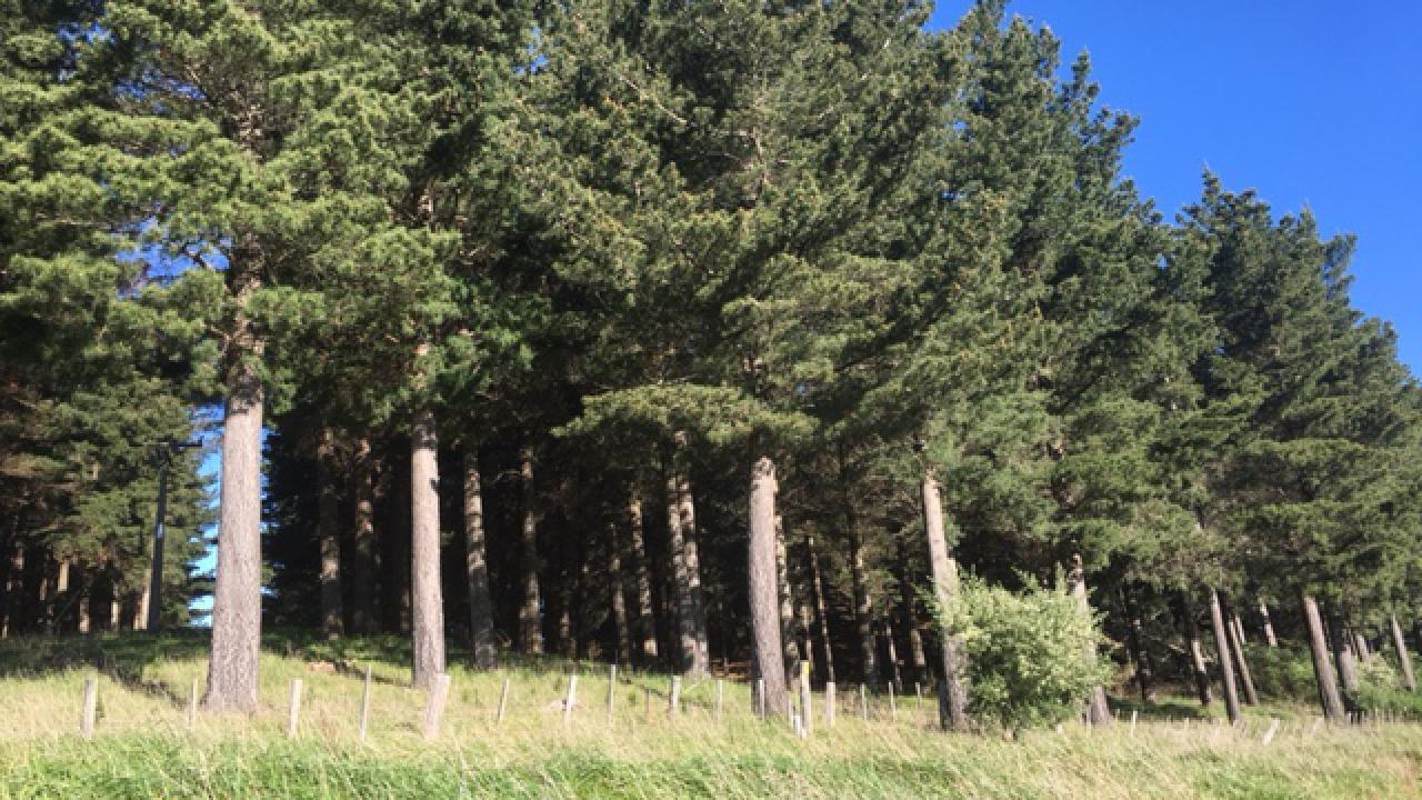 Kohekohe Forest Homewood Road, Masterton Surrounds