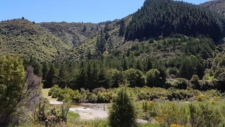 946 Mangatarere Valley Road, West Taratahi