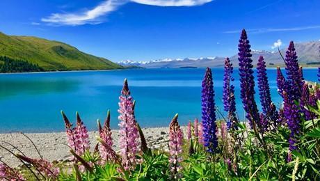 Lake Tekapo Resort, Lakeside Drive, Lake Tekapo