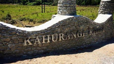 Pukeko, Kahurangi Ridge, Karamea