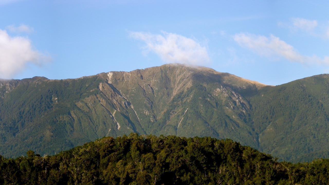 Karearea, Kahurangi Ridge, Karamea