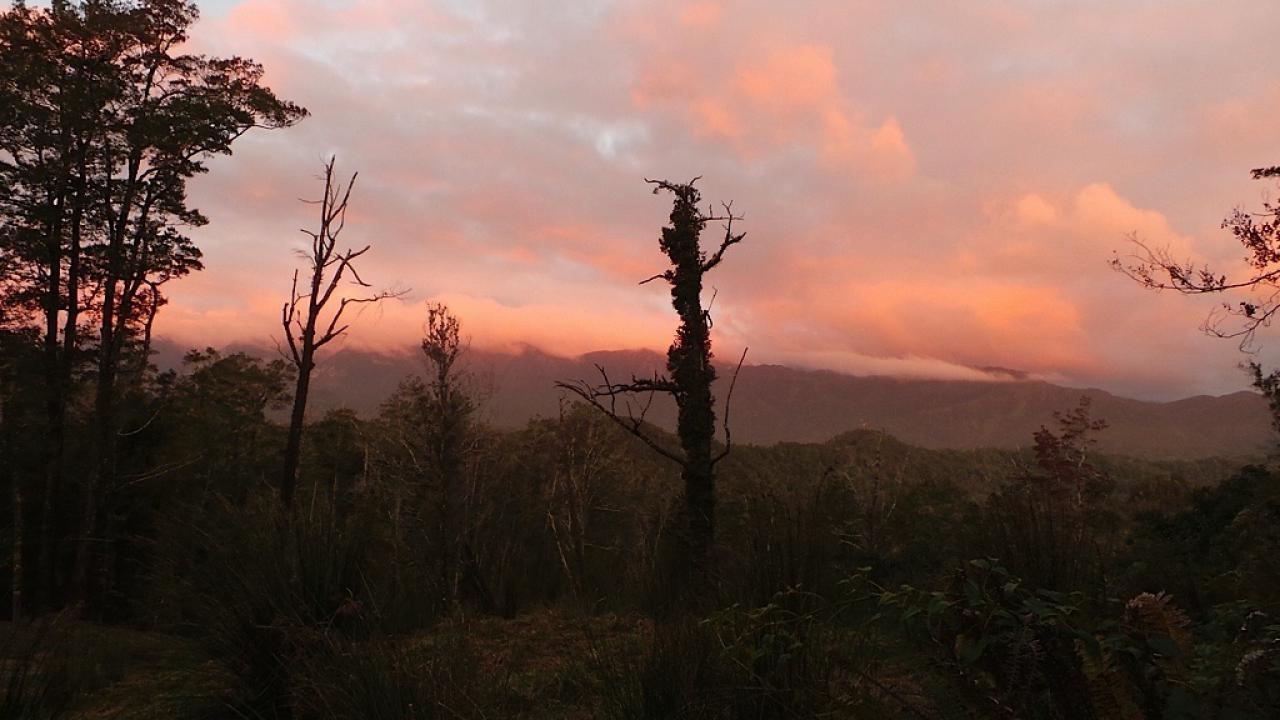 Kahikatea, Kahurangi Ridge, Karamea
