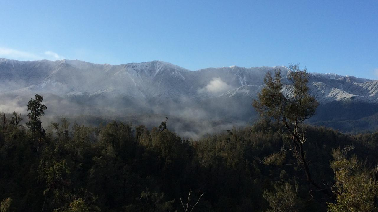 Kereru, Kahurangi Ridge, Karamea