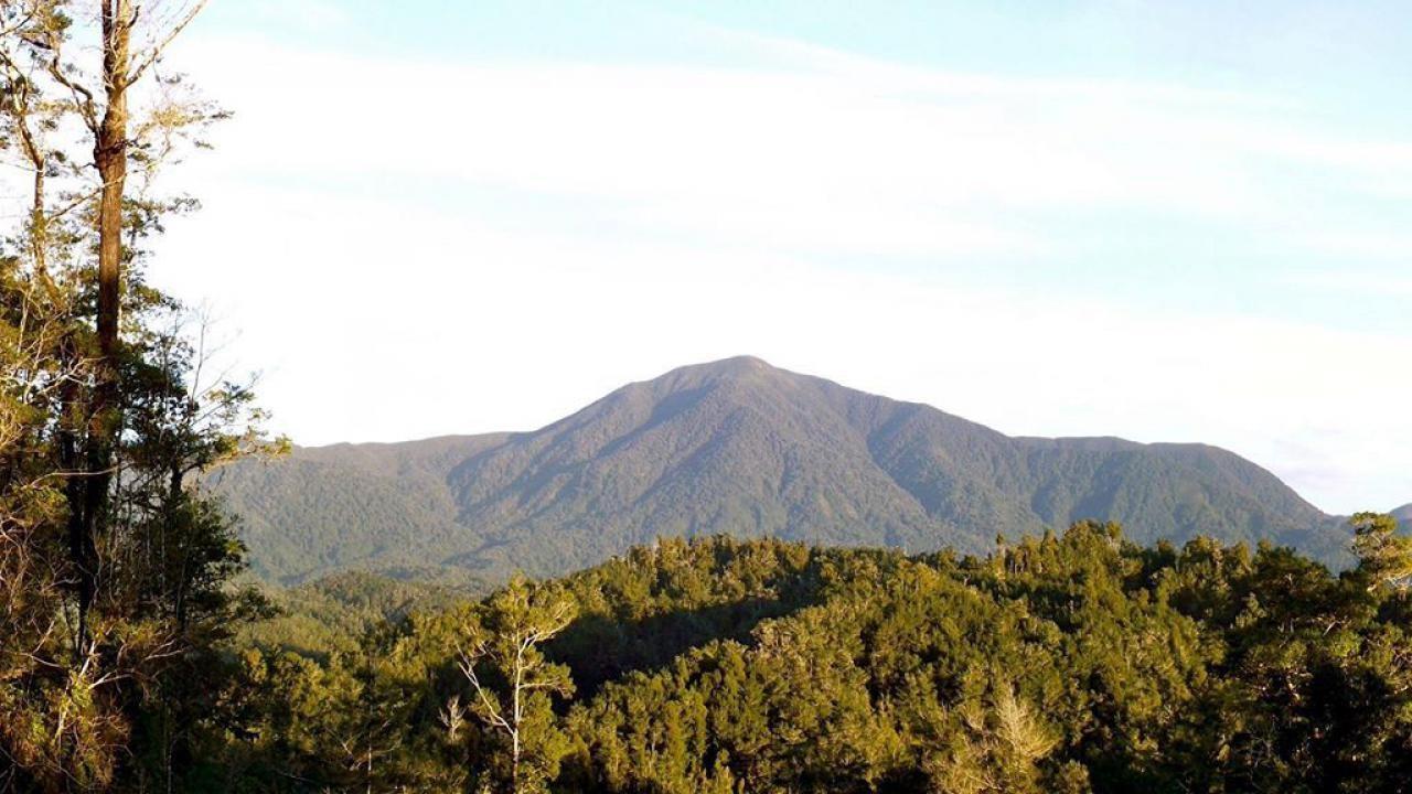 Weka, Kahurangi Ridge, Karamea