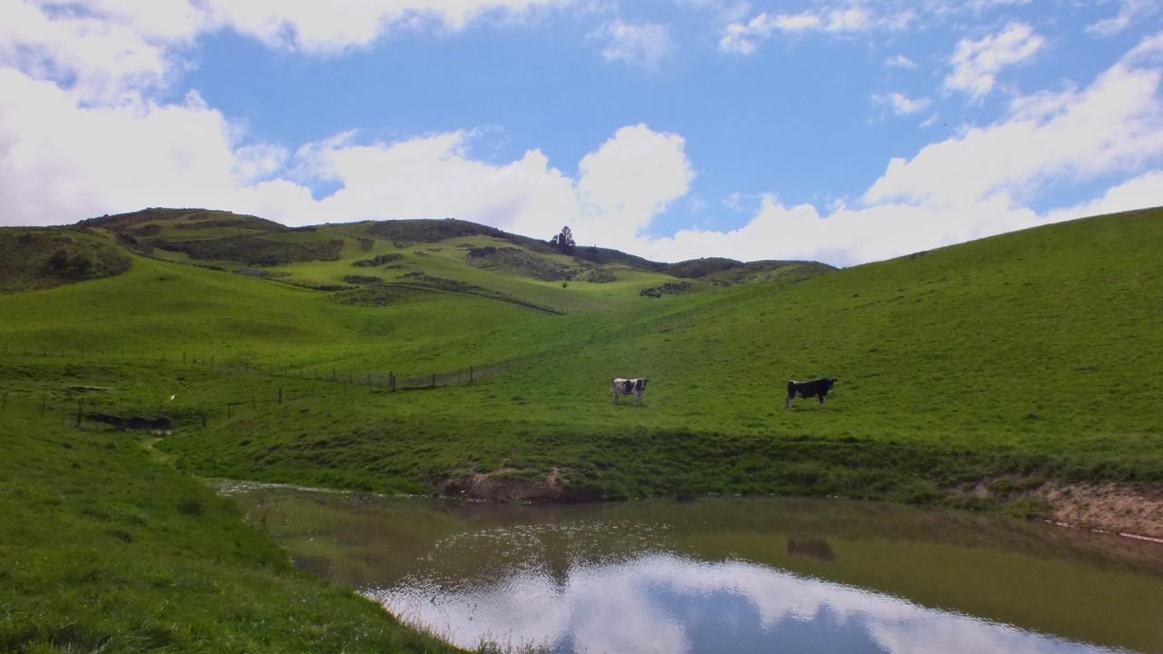 283 McRaes Road, Waikari